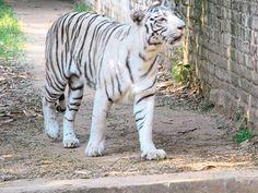 Sanjay gandhi jaivik udyan - in Bihar, India