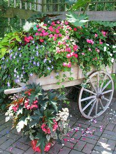 Pin on Backyard Container Flowers, Flower Planters, Container Plants, Garden Planters, Container Gardening, Garden Wagon, Garden Cart, Garden Front Of House, Lawn And Garden