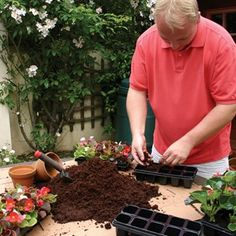 Complete Plant Growing on Kit The best possible start for your plantsFor your added convenience and offering a £1 SAVING, we have put together as a package - one 9 Litre Brick of Compressed Coir and enough Grow On Trays for your 7 http://www.MightGet.com/january-2017-11/complete-plant-growing-on-kit.asp