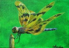 2014-19 Dragonfly #2  SOLD 5x 7inches, Unframed  Acrylic on canvas  This is the second painting in a series of dragonfly paintings. They come in an amazing variety of colours, shapes and sizes.