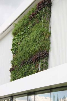 vertical garden, IGS, vertikal, vertikale, Pflanzgefäße, Kübelalternative, Alternative, Blumentopf, Blumentöpfe, vertical gardening, Überblick vertikale Pflanzgefäße, Tipps, vertikales Gärtnern, Garten an der Mauer