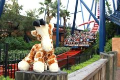 """Where's Raffie the Giraffe? Visit Facebook.com/BuschGardensTampaBay to participate in the """"Where's Raffie?"""" challenge every day at 3:00 p.m. from 4/23/12-4/30/12."""