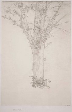 Odilon Redon, Tree, 1892 I can do this and will, when I can sit still. Painting & Drawing, Painting Prints, Art Prints, Drawing Trees, Paintings, Odilon Redon, Tumblr, National Gallery Of Art, Print Artist