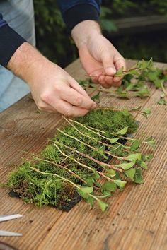 Cuttings propagation from the roll - Garten - Tipos de Jardim Vegetable Garden For Beginners, Gardening For Beginners, Gardening Tips, Hydrangea Care, Plant Growth, Edible Garden, Landscaping Plants, Propagation, Cuttings