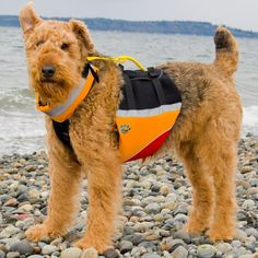 Outdoor Dog Accessories and Toys:  MTI underDOG Floatation Vest from REI
