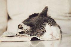 Kitty, cat, cute, nuttet, adorable, sleepy head, reading, adorable, precious, photo