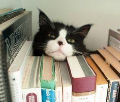 Librarian cat.  ♥