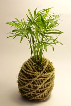 Home decor kokedama...