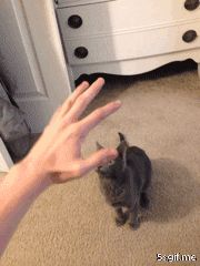 This is what happens when I try to pet my kitten…All the stinking time!