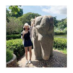 Instagram의 @highyoooon님: 코끼리야.. 누나가 낼 모레 너를 타야해.. 미리 인사하고 사과할게. 좀 무거울꼬야 #여행 #여행스타그램 #thai #일상 #daily #태국여행 #파타야 #travel
