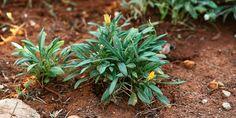 Gardening Tips, Plants, Succulents, Garden