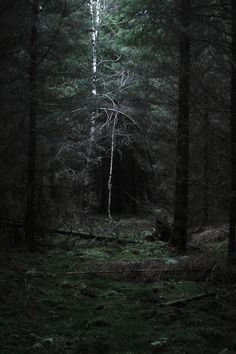 into the dark wood she goes.