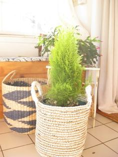 Charming form meets handy function in our small Bianca basket, handwoven in Indonesia of seagrass in a chic white and natural striped design. Bamboo Basket, Stripes Design, Hand Weaving, Plants, Hampers, Hand Knitting, Plant, Planets, Weaving