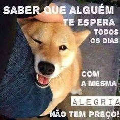 Frases e Posts Siberian Husky Puppies, Husky Puppy, Love Pet, I Love Dogs, Animals And Pets, Cute Animals, Pets 3, Pet Shop, Gatos
