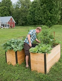Elevated Planter Boxes Are Easy to Plant, Tend and Harvest