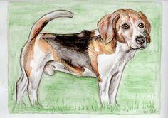 Sammy, Beagle, Aquarellfarbstifte, Zeichnung