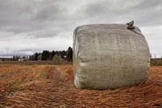 Hay Roll Under The Autumn Skies - A hay roll wrapped in plastic is waiting for the farmer to collect it at the Northern Finland. The sky is getting darker, the bad weather is coming.
