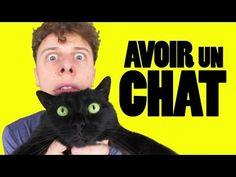 NORMAN - Avoir Un Chat >>Avoir un chat c'est pas si facile que ça...