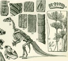 1897 Paleontologie Dinosaure Fossile Trilobite Ammonite Larousse Illustration Grand Format 19ème siècle Vintage 115 ans d'âge