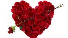Valentine Day Rose