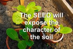 And ....that seed is the only influence you have over your future.