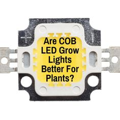 Learn why COB LED grow lights are great for plants and why, plus which COB chip is best and which brand uses those chips in reasonably priced fixtures. Grow Lights For Plants, Grow Room, Plant Lighting, Light Well, Light Works, Marijuana Plants, Cannabis Growing, Led Grow