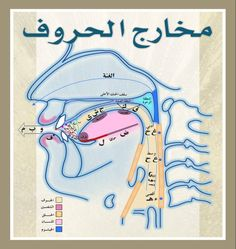 Islamic Phrases, Islamic Messages, Coran Tajwid, Tajweed Quran, Learn Arabic Alphabet, Quran Book, Learning English For Kids, Arabic Lessons, Islam For Kids