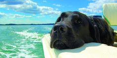 Black Labrador black lab trip boat - Here are important life lessons that are sometimes easy to forget in our hectic lives, that all Labrador owners must never forget. Dogs On Boats, Boating Tips, Cool Boats, Boat Stuff, Black Labrador, Black Labs, Fishing Boats, Kayak Fishing, Outdoor Fun