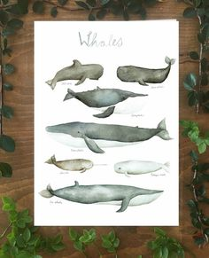 Whales, collection of whales, underwater animal, nautical, print Sea Whale, Blue Whale, Pilot Whale, The Narwhal, Underwater Animals, Baby Room Themes, Humpback Whale, Watercolor Illustration, Under The Sea