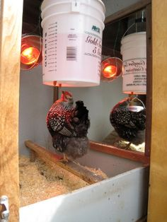 Ideas for heated chicken waterers