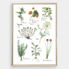 Pencil Drawings, Art Drawings, Drawing Art, Collage Poster, Format A3, Kitchen Herbs, Watercolor Drawing, Print Pictures, Deco