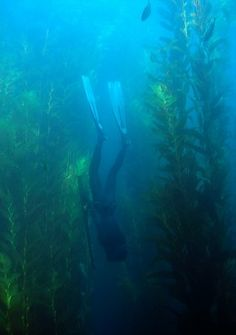 Freediving while spearfishing.