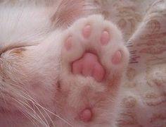 Baby Cat Foot...<3