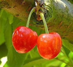 »»» Bäume und Esoterik: Kirschen sind nicht nur lecker, sie sind ein Sommersymbol. Die süßen...    #wissen