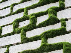 grass/moss wall