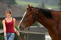 Natural Horsemanship (NHS) – was ist das eigentlich? Es ist in aller Munde: Das Natural Horsemanship (NHS). Es ist so sehr in aller Munde, dass man manchmal den Eindruck gewinnt, dass es alles und ...