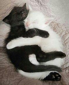 Siyah beyaz aşk