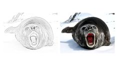 Leopard Seal coloring page Zoo Animal Coloring Pages, Zoo Animals, Seal, Activities, Harbor Seal