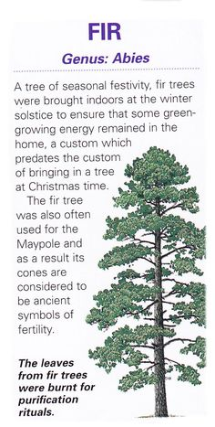 Sacred celtic tree - Fir - Pinned by The Mystic's Emporium on Etsy