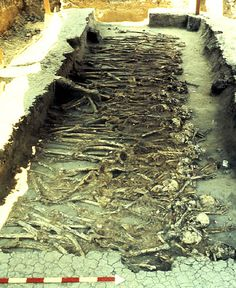 One of several mass burials found during the excavations of Mound 72 at Cahokia.