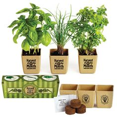 Shining Ideas Herb Garden Gift Excellent Decoration GrowPot Eco