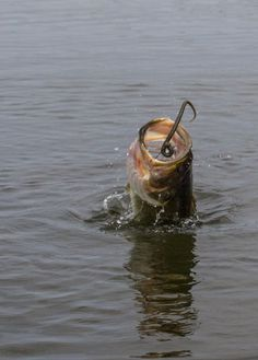 10 Worm Fishing Secrets You May Not Know