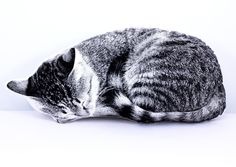 Plush Cat Nap Pillow