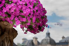 Luxembourg Gardens - Paris France © Andrea Arosio 2015  Follow me: www.andreaarosio.com https://www.facebook.com/andrearosiophoto