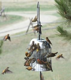 Grackle & Other Nuisance Bird Stopper Squirrel Proof Large Size Bird Feeder