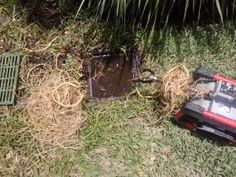 Tree roots can clogg your sewer or drain.
