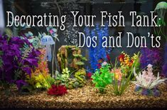 How to Decorate Your Fish Tank: Dos and Donts - Fishing Tank - Ideas of Fishing Tank - Tips for how to safely decorate your fish tank. How to Decorate Your Fish Tank: Dos and Donts - Fishing Tank - Ideas of Fish Tropical Fish Store, Tropical Fish Tanks, Tropical Fish Aquarium, Betta Aquarium, Fish Aquariums, Tanked Aquariums, Saltwater Aquarium, Betta Tank, Fish Tank Themes