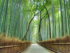 The serene beauty of the bamboo forest in the Arashiyama district is a wonderful site to behold. No wonder it's one of Pinterest's most beloved places.