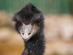 Punish Students Who Tortured Emu to Death PETITION - Care2 News Network