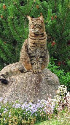 cat_grass_flowers_garden_rock_sitting_landscape_51916_640x1136 | Flickr - Photo Sharing!